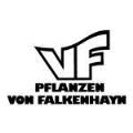LOGO_Falkenhayn - VF Pflanzen GmbH & Co. KG