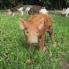 LOGO_Schweinehaltung