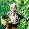 LOGO_Organic Tropical Fruits