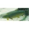 LOGO_Aquakultur und Fischwirtschaft