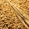LOGO_Getreide aus kontrolliert biologischem Anbau