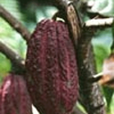 LOGO_Kakaoprodukte