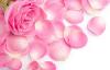 LOGO_FREEZE DRIED FLOWERS