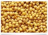 LOGO_Organic Oil Seeds