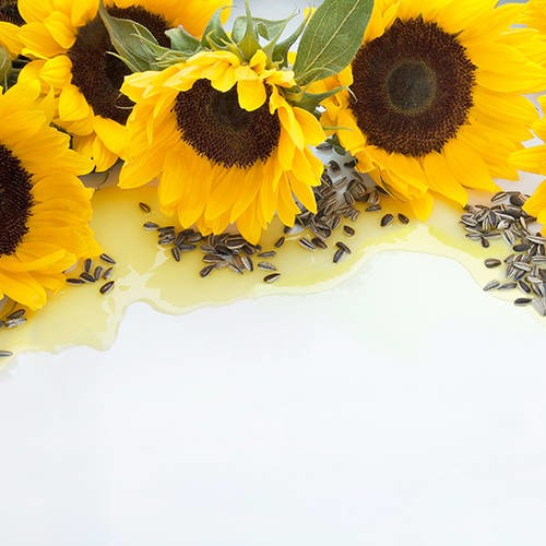 LOGO_Sunflower Oil