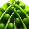 LOGO_Organic Lentils/Peas