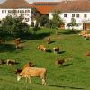 LOGO_Österreich – Land der Bioniere!