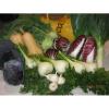 LOGO_Verschiedenes Gemüse