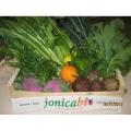 LOGO_Kräuter und Gemüse