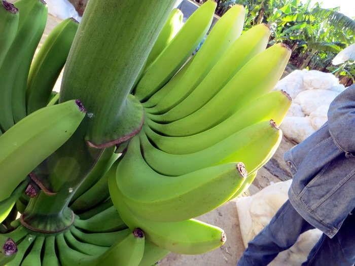 LOGO_Fresh bananas organic fairtrade