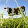 LOGO_Teilstücke vom Bio - Lamm