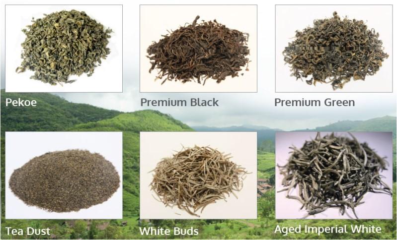 LOGO_Organic Tea