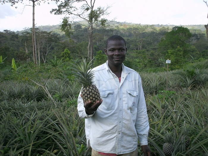 LOGO_Pineapple from Togo