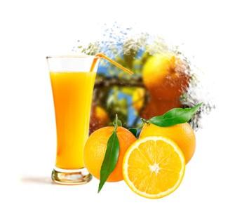 LOGO_Citrus Concentrate