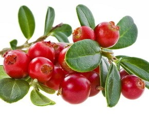 LOGO_LINGONBERRIES