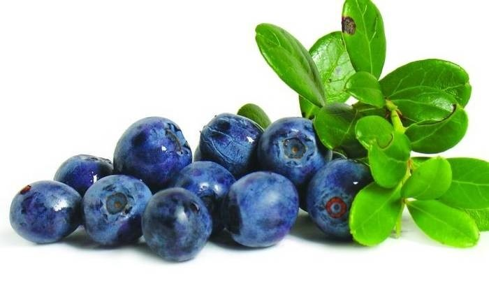 LOGO_BLUEBERRIES