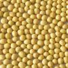 LOGO_Organic Soybean