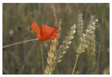 LOGO_Förderung und Erfolg des Ökologischen Landbaus