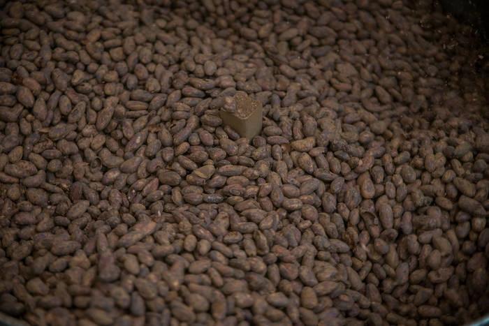 LOGO_Cacao Beans - Wild Native Criollo & Raw