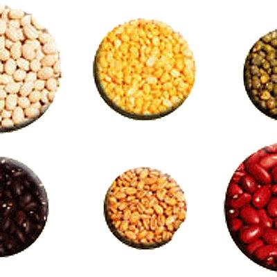 LOGO_Special Seeds
