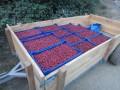 LOGO_Frozen fruits / Berries