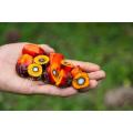 LOGO_Organic palm oil