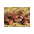 LOGO_Wild cacao beans, cacao, hazelnut, almond, pistachio