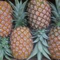 LOGO_Fruits