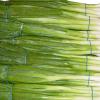 LOGO_Gemüse