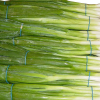 LOGO_Vegetables