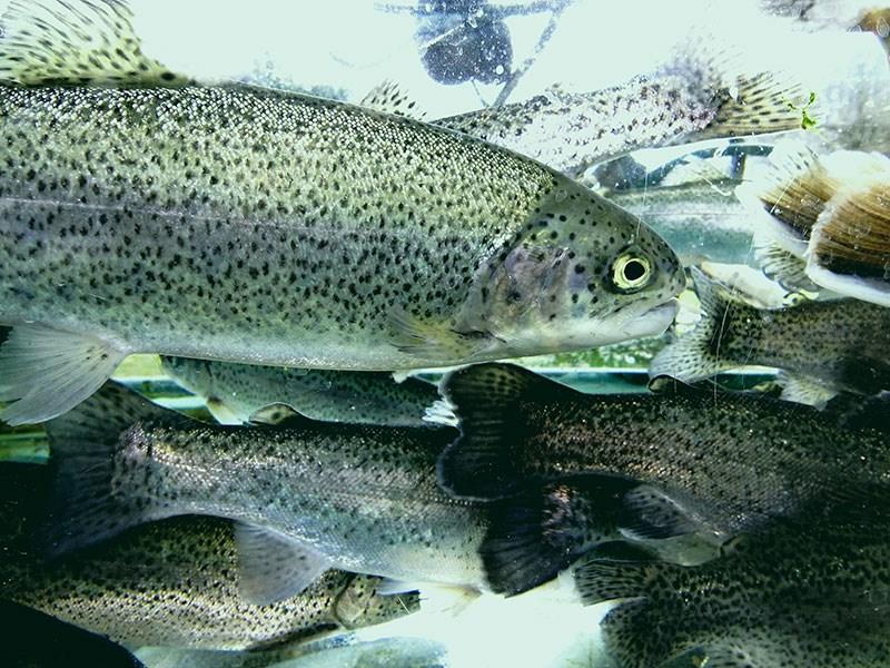 LOGO_Unsere Förderangebote für die Aquakultur und Fischwirtschaft