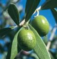 LOGO_Zertifizierung von Bio-Landwirtschaft und Bio-Lebensmitteln