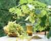 LOGO_Organic herbs and dried fruits