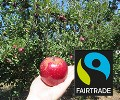 LOGO_Fairtrade NFC's, Concentrates & Purees