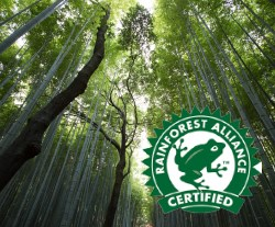LOGO_Rainforest NFC's, Concentrates & Purees