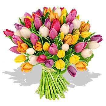 LOGO_Tulips