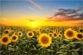 LOGO_Oilseeds & Feed