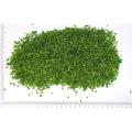 LOGO_Organic Frozen herbs in industrial packaging