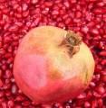 LOGO_Organic Seeds and Kernels