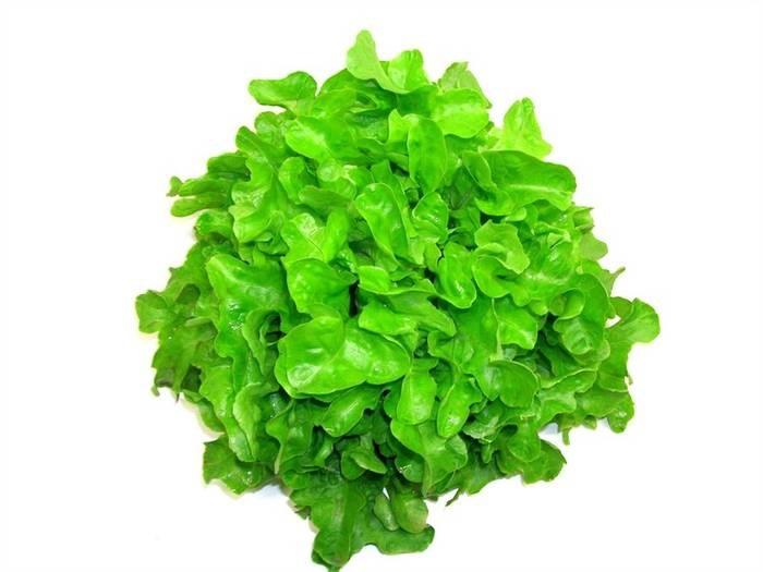 LOGO_Salads