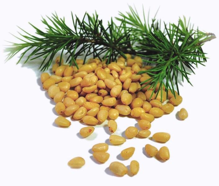 LOGO_Siberian Pine Kernels