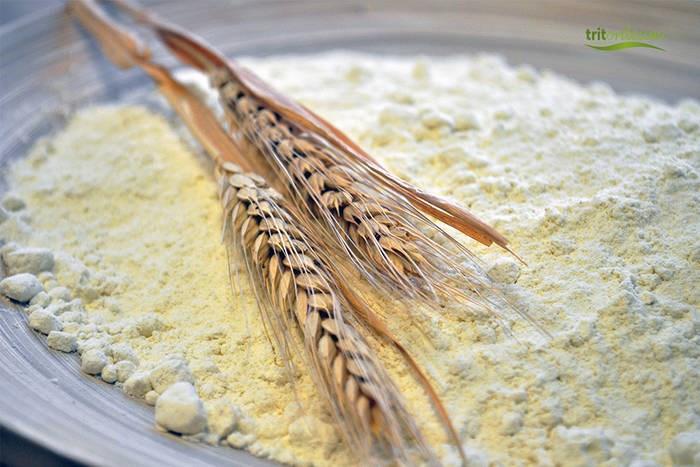 LOGO_Tritordeum flour