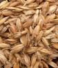 LOGO_spelt wheat
