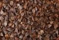 LOGO_buckwheat
