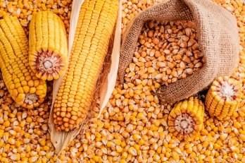 LOGO_corn