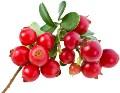 LOGO_Lingonberry