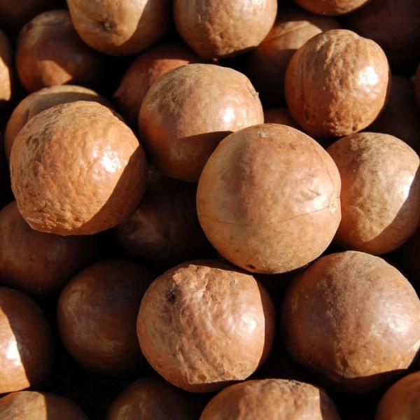 LOGO_Organic Macadamia Oil (Kenya)