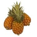 LOGO_Sun ripe Pineapple
