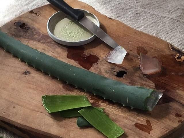 LOGO_Aloe Arborescens Blätter