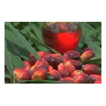 LOGO_Palm oil products